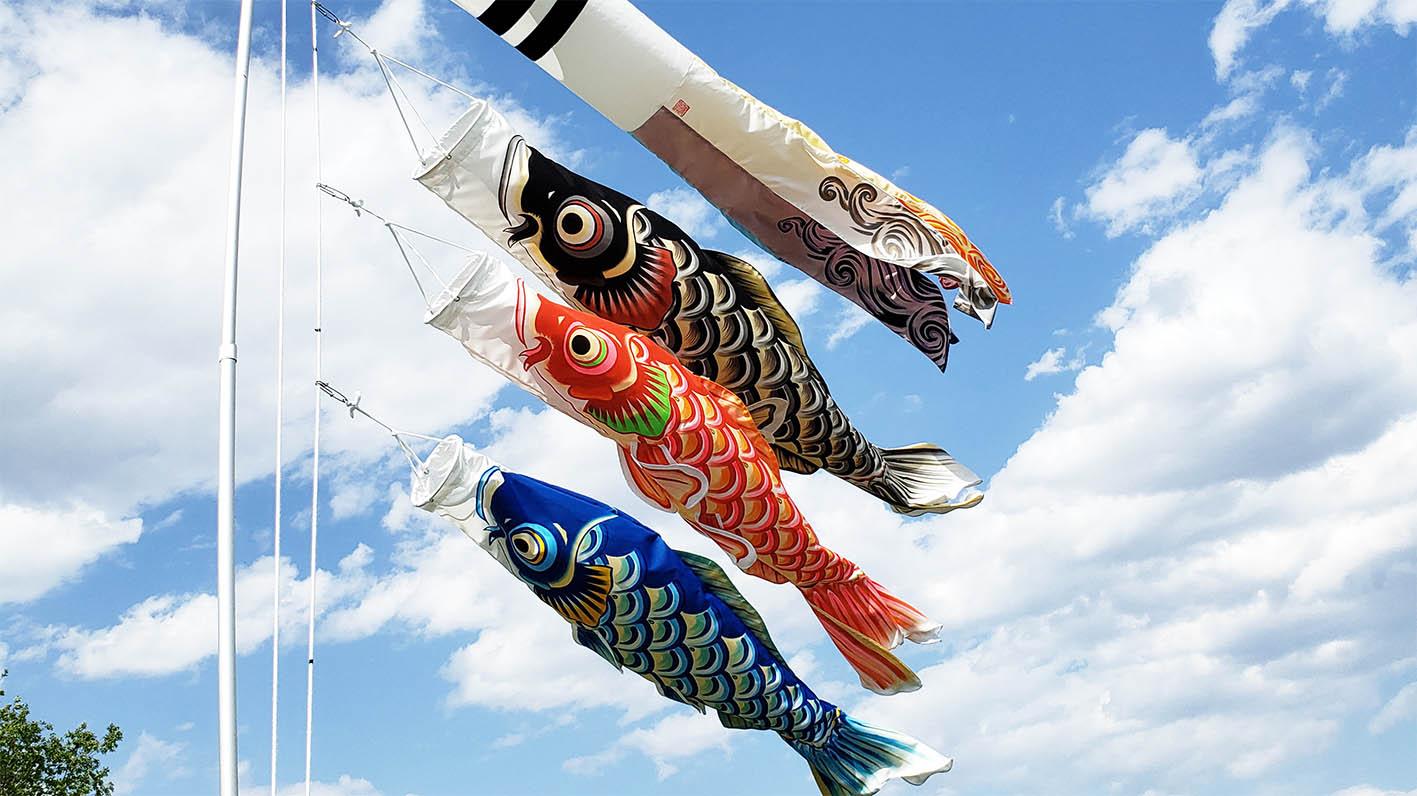 泳ぐ鯉のぼり